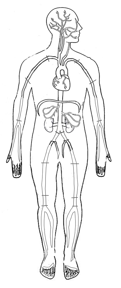 Anatomy Artery Coloring Page
